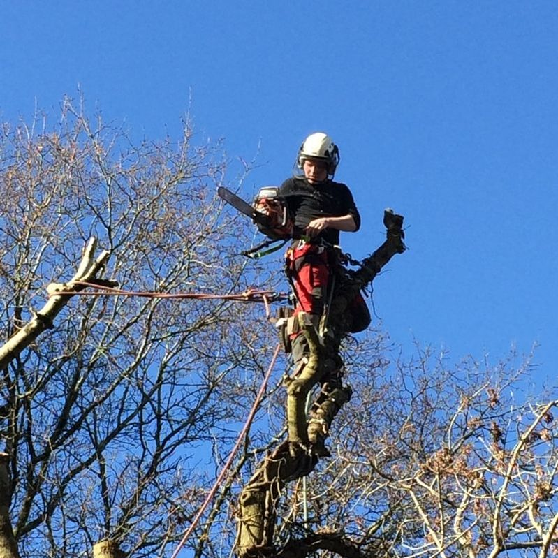 Tree surgery, South Wales